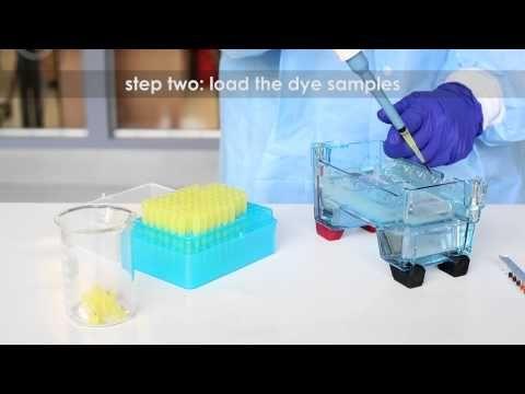 Performing Agarose Gel Electrophoresis - Edvotek Video Tutorial