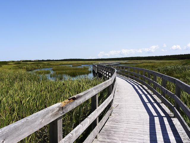 Greenwich Trail over floating boardwalk. What To Do in PEI: 7 Ideas for Summer