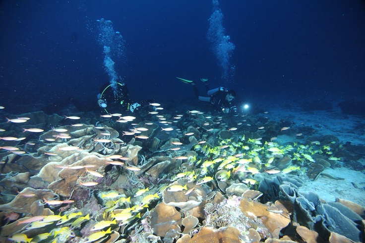 The coral reef is a very productive marine ecosystem; it is 100 times more productive than other parts of the sea. The coral reef forms a biological habitat for and contributes significantly to marine species. The coral reef has become a strategic area for fishermen to harvest the bounties of the sea as a source of food wisely.
