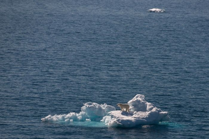 UK-based Goldstein, who is a guide for Exodus, says: 'Polar bears are in danger of becoming an anachronism, a fading apex predator that suffers more and more as the sea ice melts earlier each year.'