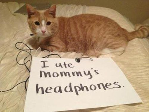 Funny Cat Shaming : theCHIVE