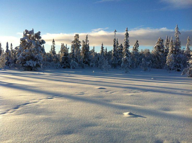 Østfjellet, Engerdal, Norway.