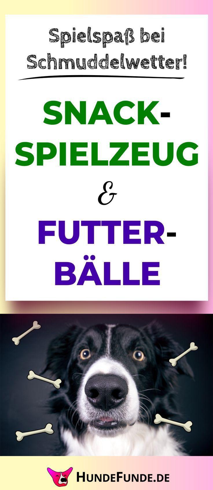 Die Konzentrierte Futtersuche Macht Hunde Glucklich Und Verkauft Langeweile Die Futtersuche Glucklich Hunde Konzentrierte Langew In 2020 Dogs Poster Animals