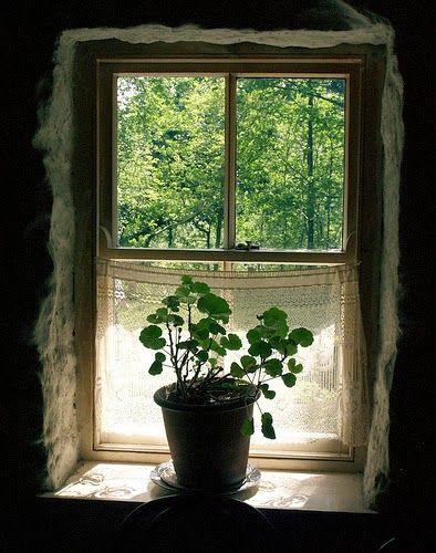 Windows of Imagination.....