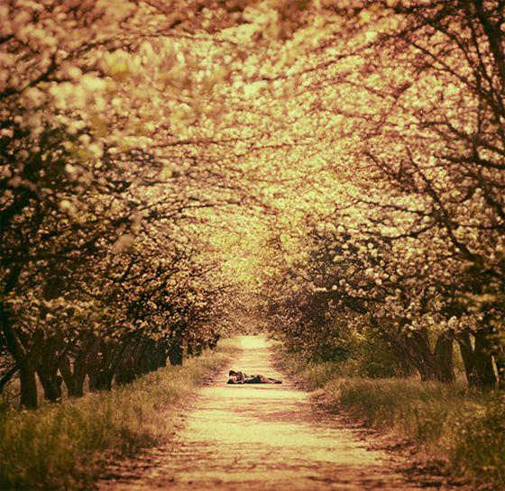 romanticPhotography Portfolio, Cherries Blossoms, Green Gables, Paths, Dreams, Romances, Art Photography, Trees, Places