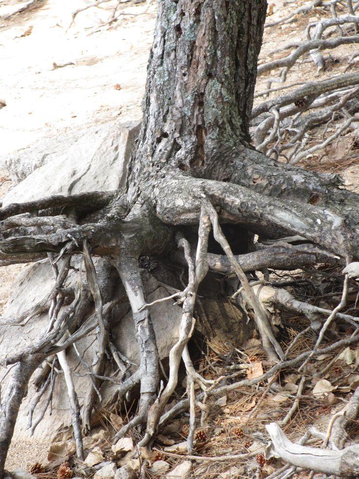#corsica #tree #sadness