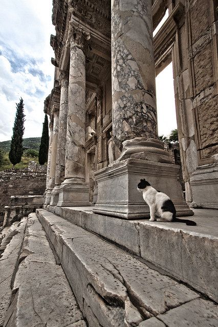 It's a beautiful world. Feline guard of the Library of Celsus, Ephesus Ruins, Turkey