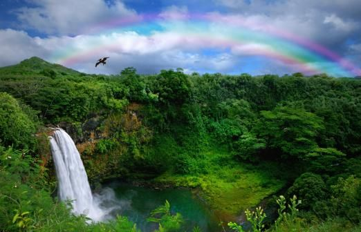Hawaii Movie Tour - Kauai | Roberts Hawaii
