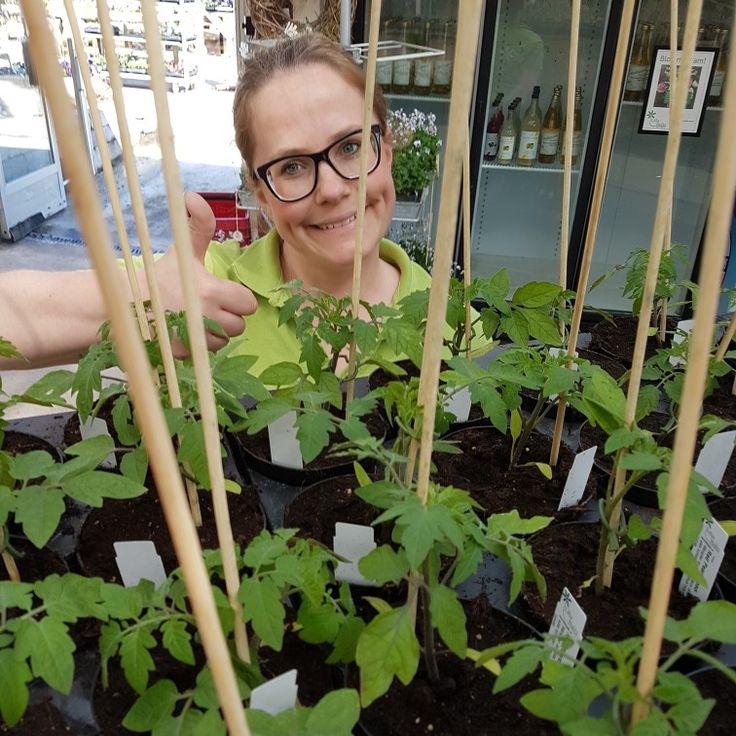 Alla ni som längtat, nu har vi tomater från egen odling! 🍅🍅🍅#lillahults @lillahultsblommor