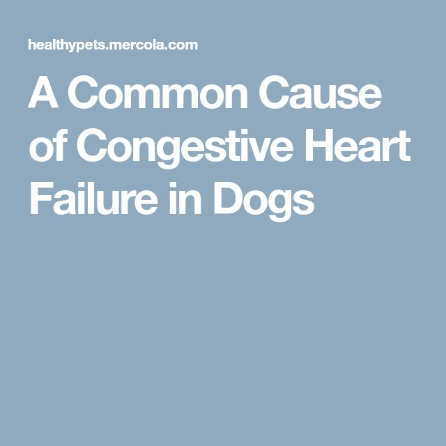 A Common Cause of Congestive Heart Failure in Dogs