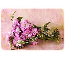 Photographic Print. #stocks #scentedstocks #pinkstocks #pinkscentedstocks #stockflowers #pinkstockflowers #flowersandivy #flowersandribbon #flowers #pinkflowers #sandrafoster #sandrafosterredbubble