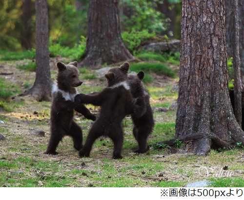 森で輪になって踊る子グマ3匹、童話のような写真が撮影され話題に。 | Narinari.com