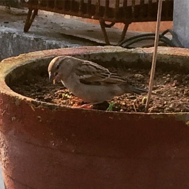 Breakfast  #instapic #instagood #photography #birds #instamood #iphone5