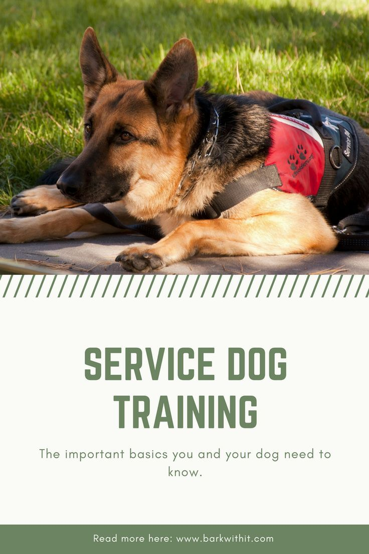 Service Dogs Service Dog Training How To Train A Service Dog