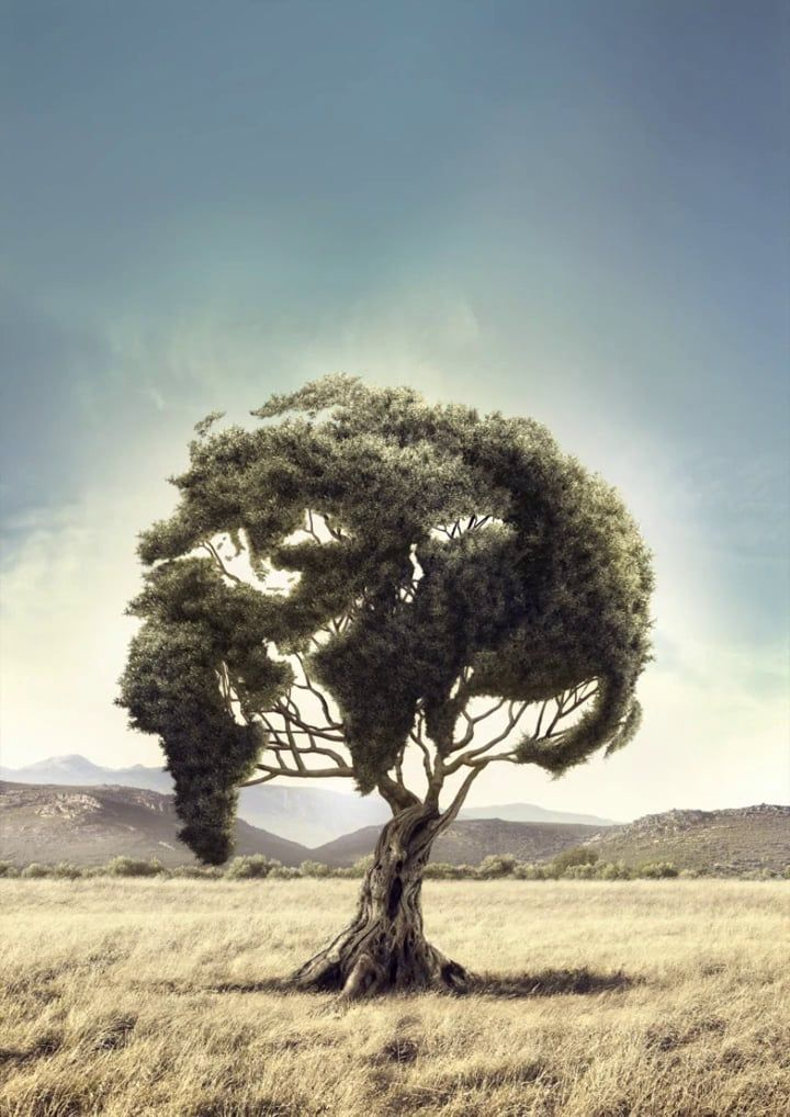 Olive tree | Scene Breakdown