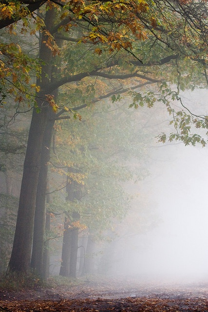 Trees in the morning mist ......by Bas Lammers, Netherlands, via Flickr