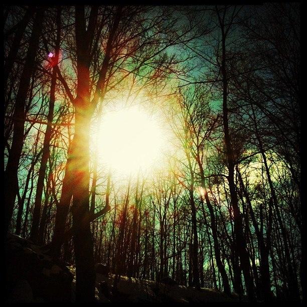 Sun thru trees