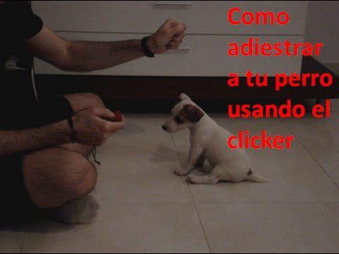 """CARGANDO EL CLICKER. Si decides usar el clicker para el adiestramiento de tu perro. Este es el primer paso que debes dar, """"presentarle"""" el clikcer al perro p..."""