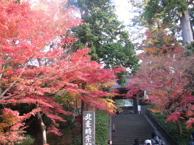 @Engakuji temple. good place for looking autumn color.