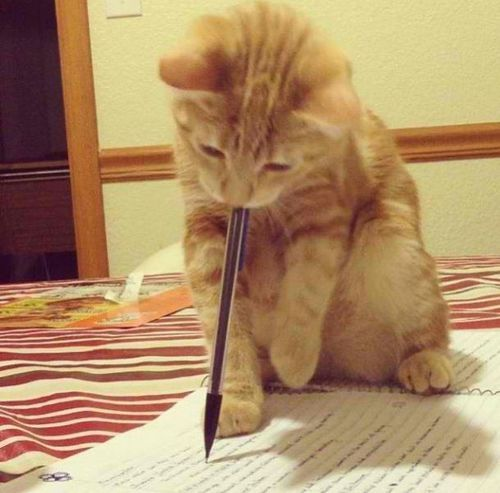 Kitty cat doing his homework.