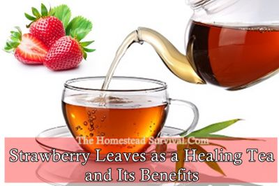 Come learn about the natural remedies using Strawberry leaves as a healing tea and it's benefits. Yes, the leaves on the Strawberry plants you grow in your
