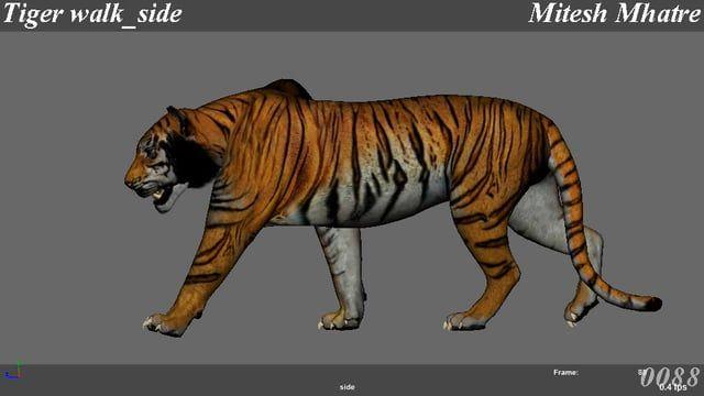Tiger walk wip, Rig from CG Spectrum cgspectrum.edu.au/