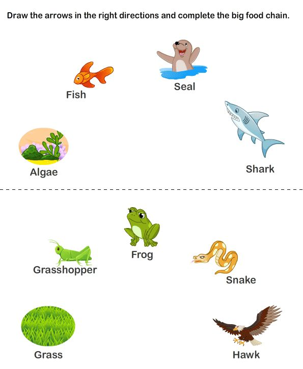 Printables Free Food Chain Worksheets food chains and on pinterest