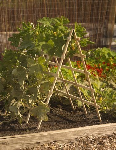 """Cedar A-Frame Squash Support by Gardener's Supply Co.. $49.95. Simply open this A-frame, """"plant"""" it in your garden or raised bed and you have a sturdy and attractive support for squash and other vining crops. Natural, untreated cedar is long- lasting and will weather to a silvery gray patina. Vertical slats are hinged at the top, and pointed at the bottom so you can easily push them into the soil to anchor the A-frame for added stability. Large grid openings ma..."""