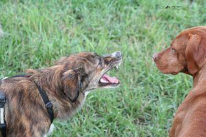 Kann man aggressives Verhalten durch Belohnung und Zuwendung verstärken?, Easy Dogs/Ulrike Seumel