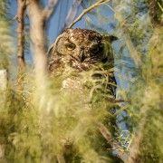OWL 01-The gardening blog