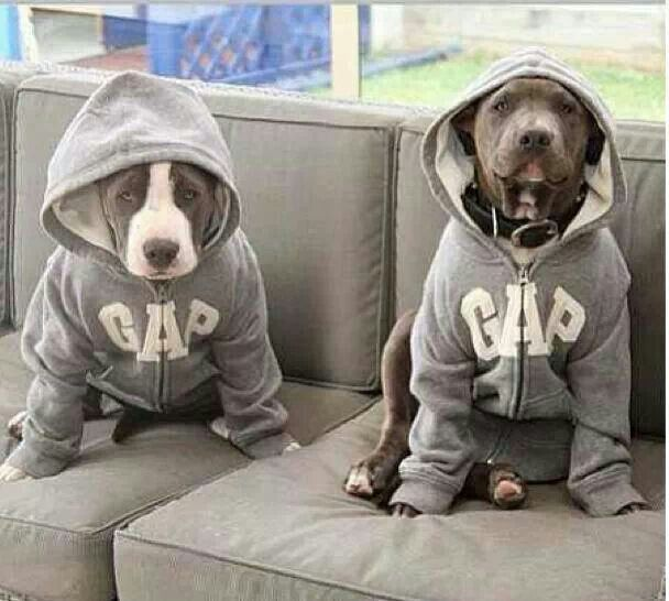 pitbulls should not be banned Dogs did not fight to the death and were rewarded for winning by  currently,  miami-dade county has a ban on pit bulls on the books, but.