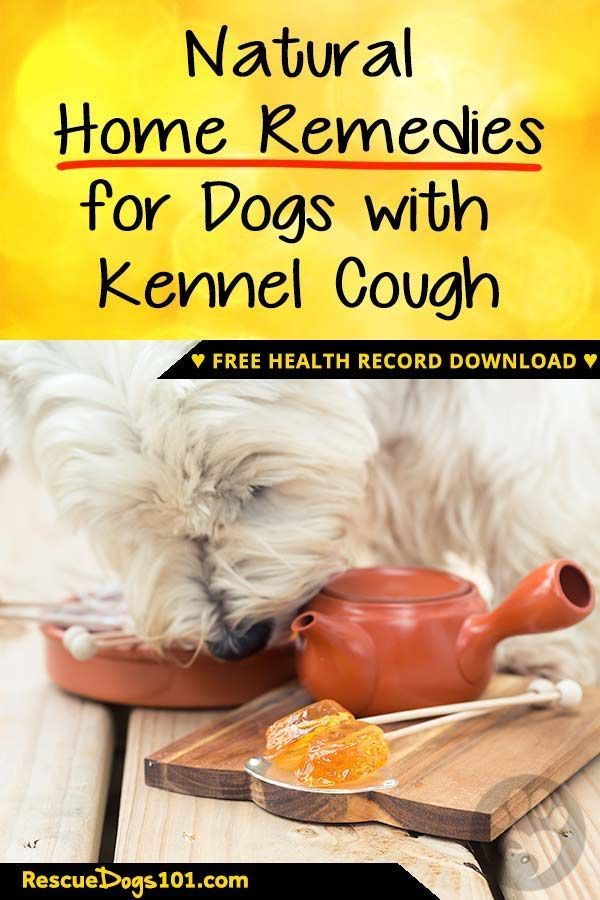 Easy And Natural Home Remedies For Kennel Cough Dog Health Tips