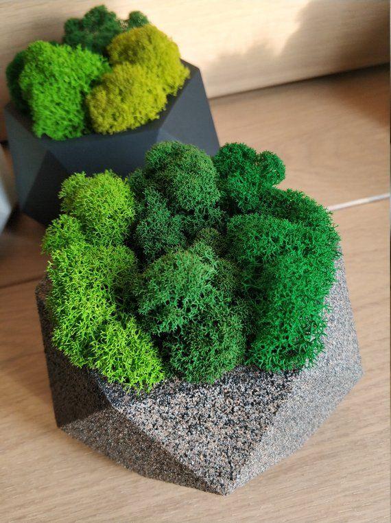 Озеленение стабилизированным мхом и растениями