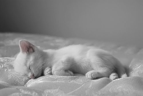 Such sweetness: Kitty Cats, Animals, Sweet, Sleepy Kitty, Pets, White Cats, Baby, Kitties, White Kittens