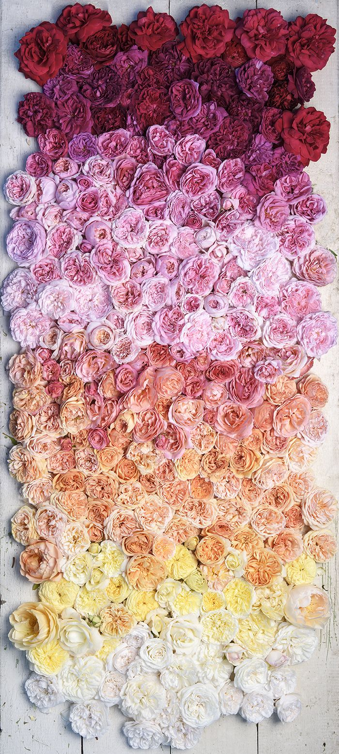 I'm in love with this floral arrangement! Roses by Georgianna Lane
