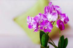 Orquídeas rosadas en el interior Foto de archivo