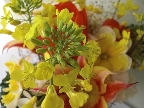 53 best edible flowers images on pinterest edible flowers drink kale flowers are sweet tasting slightly peppery mightylinksfo