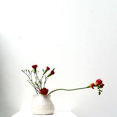 les 41 meilleures images du tableau plante sur pinterest. Black Bedroom Furniture Sets. Home Design Ideas