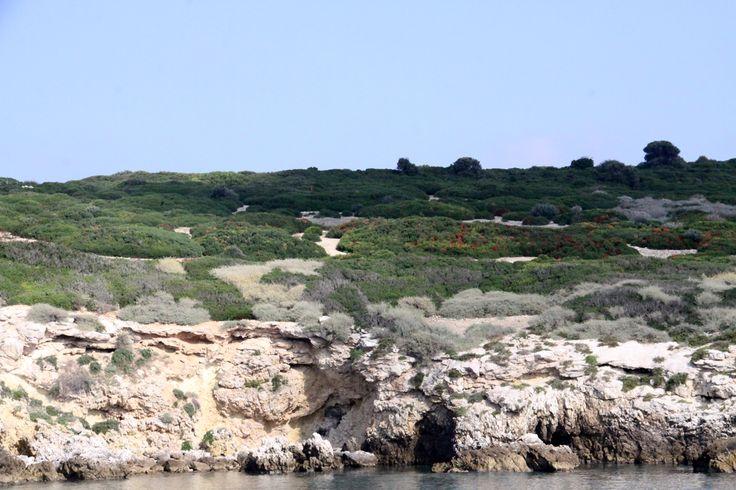 Isola di Capraia: vegetazione Mediterranea
