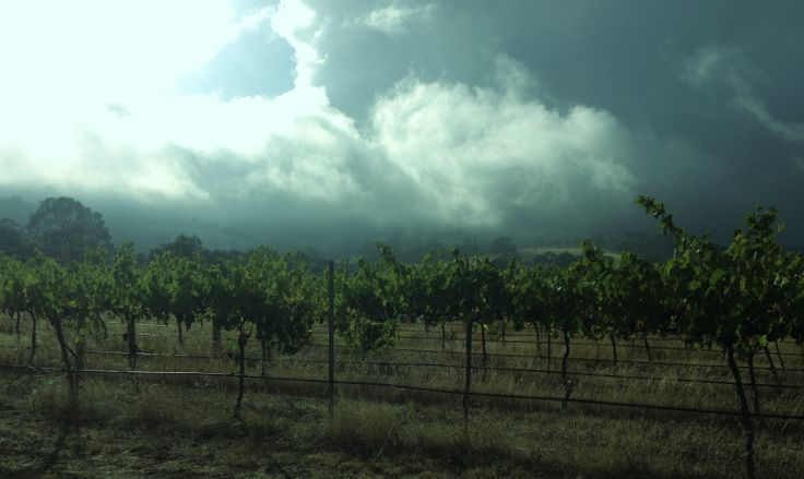 Mist rolling over the vines! #crazyweather