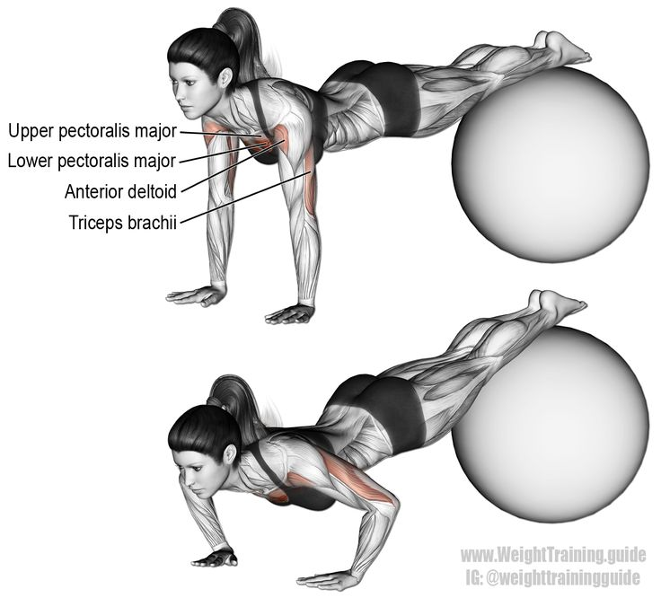 Stability ball decline pushup. A compound push exercise. Main muscles worked: Upper Pectoralis Major, Lower Pectoralis Major, Anterior Deltoid, and Triceps Brachii. Visit site to learn the benefits of using a stability ball for this exercise.
