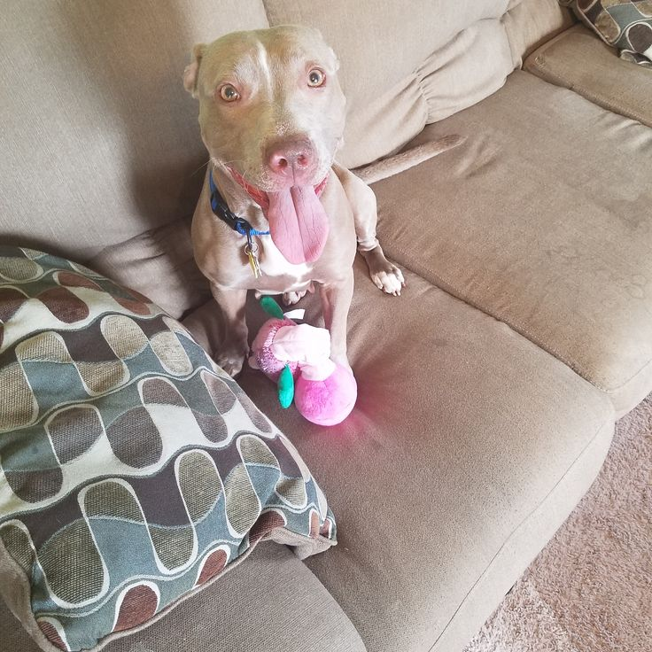New dog pound puppy with her toy http://ift.tt/2p6LmLO