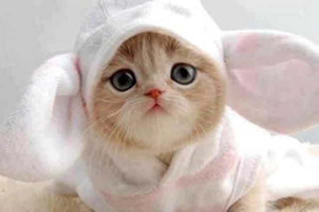 I'm not usually an advocate of dressing up cats but this picture is soooo cute
