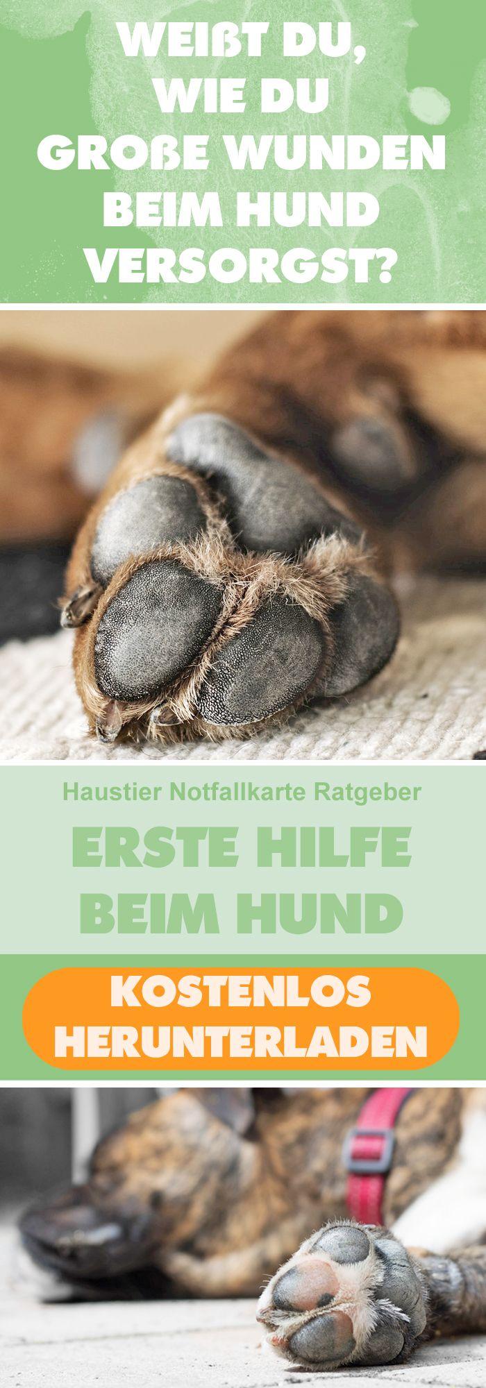 """Weißt Du, wie Du große Wunden beim Hund versorgst? Lade unseren kostenlosen Ratgeber """"Erste Hilfe beim Hund"""" herunter! #haustier #notfallkarte #hunde #blog"""