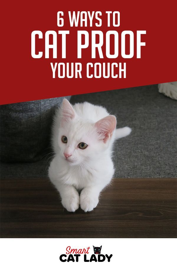 6 Ways To Cat Proof Your Couch In 2020 Cat Proofing Cats Cat Care
