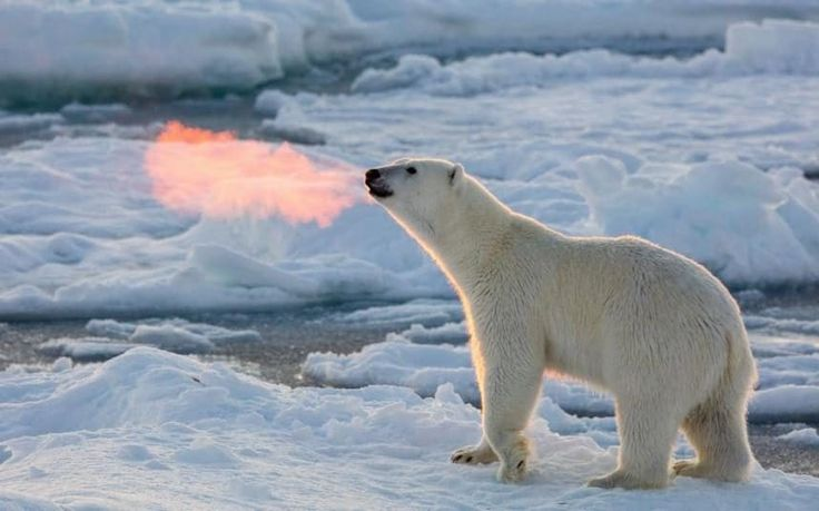 Dire predictions that the Arctic would be devoid of sea ice by September this year have proven to be unfounded after latest satellite images showed there is far more now than in 2012.