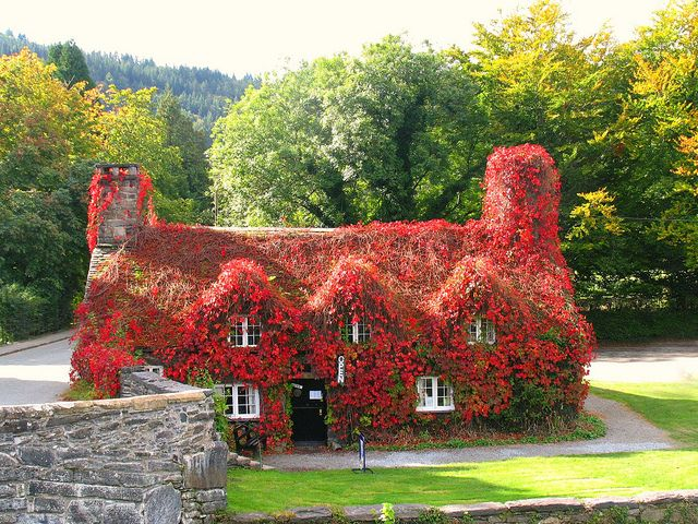 English Cottage. Clever and beautiful to combine Mother Nature right ON your home!
