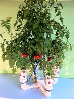 fresh strawberries year round!!