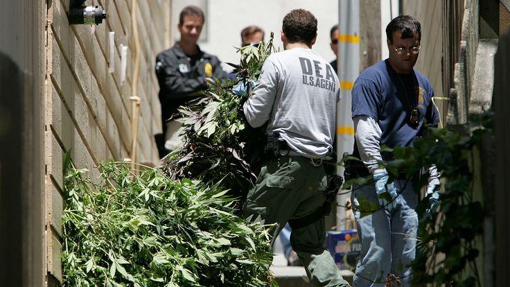 The DEA continues to raid cannabis plantations. #DEA #hemp
