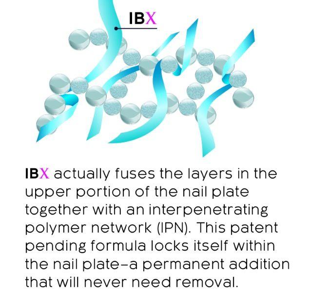 IBX Info